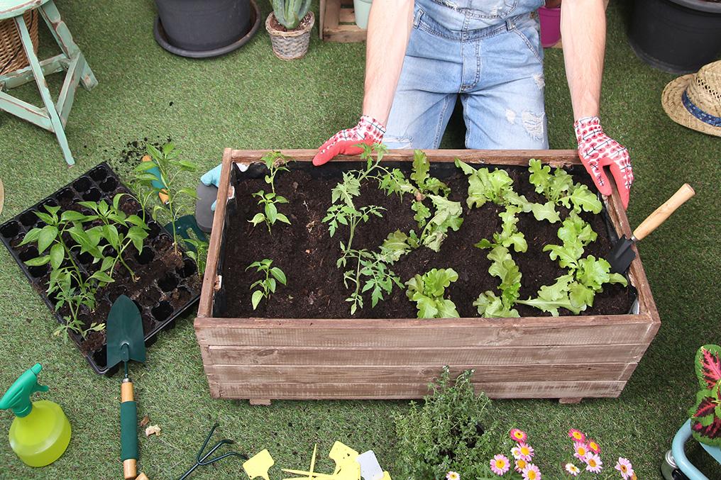 Beliebt Bevorzugt Einen Gemüsegarten planen und anlegen – so geht's - consumo.ch #HF_27