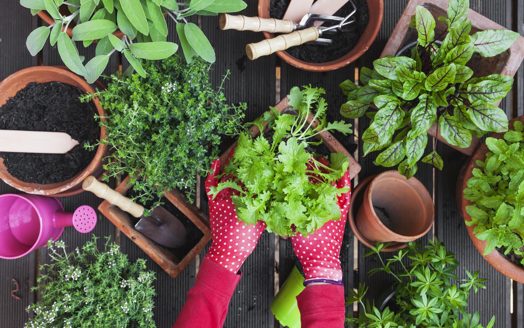 Come Coltivare Pomodori Sul Balcone c'è più gusto a coltivare da soli - consumo.ch: temi legati